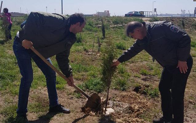 Jurnalistlərin binası qarşısında 300 ağac əkilib